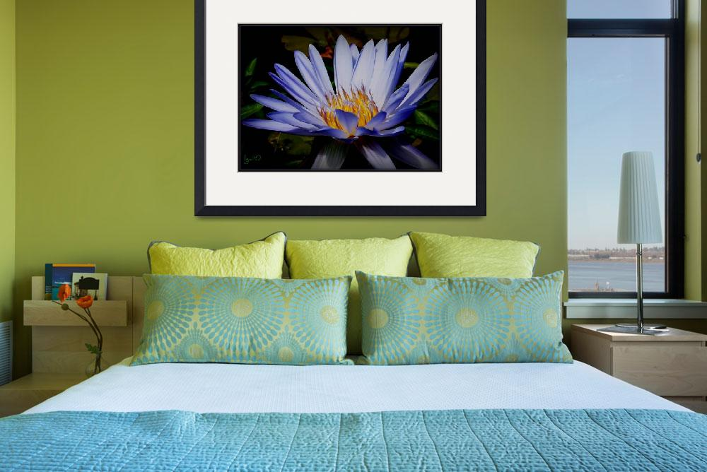 """Water Lilly Collection Nymphaea Caerulea&quot  by imagistiks"