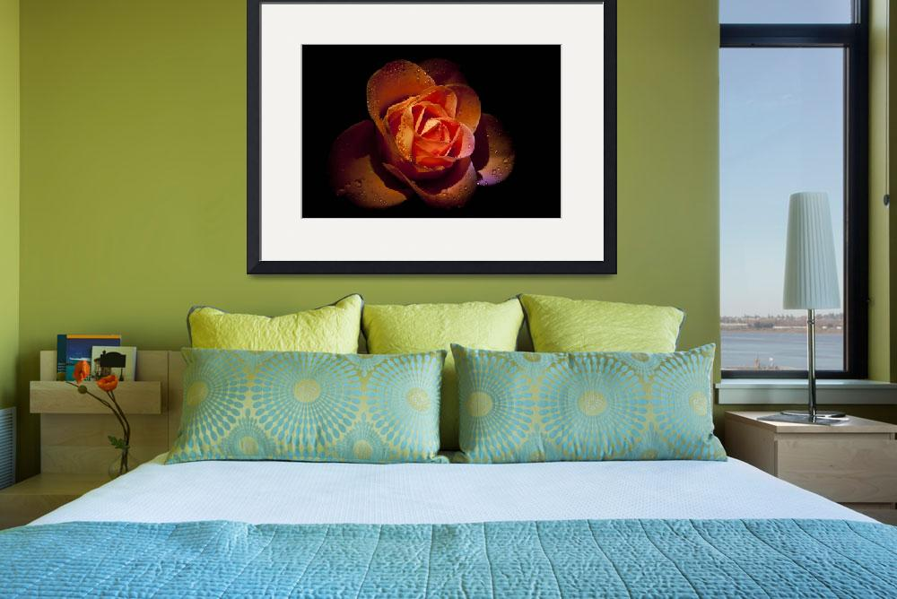 """""""ROSE&quot  (2010) by Tezza"""