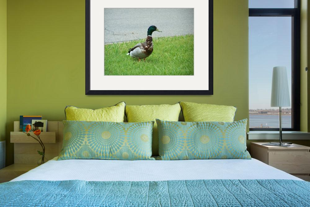 """""""Duck On&quot  (2011) by SharonSerota"""