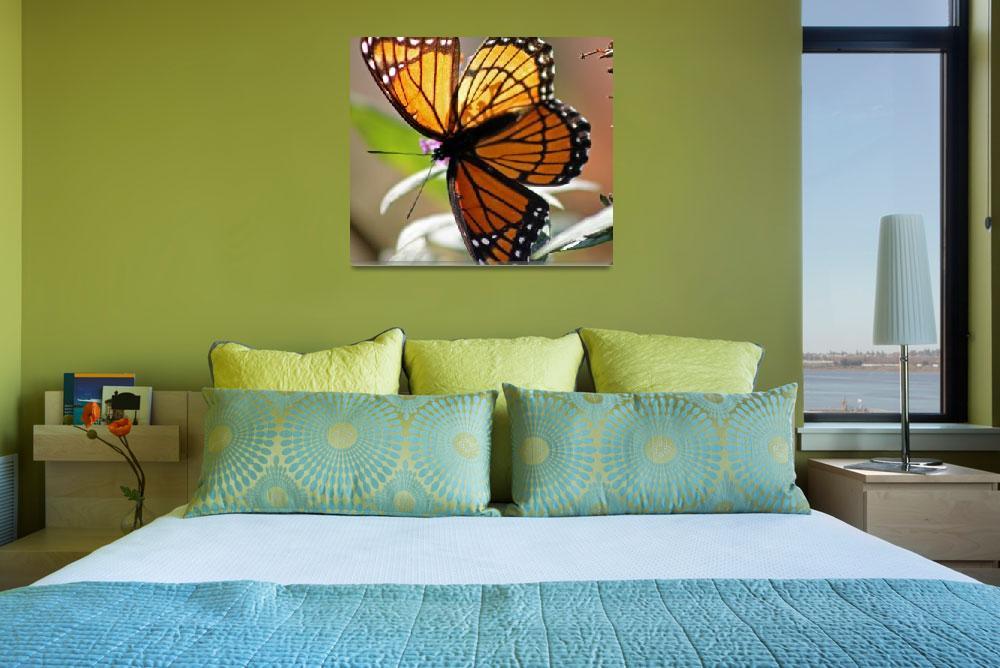 """Butterfly  Viceroy Square""  (2011) by KsWorldArt"