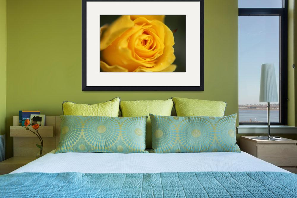 """""""Yellow Rose&quot  (2013) by aidao"""