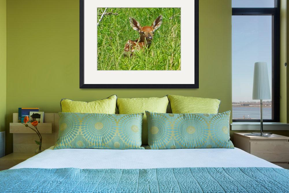 """""""Fawn in the Tall Grass&quot  (2010) by crazysuncompany"""