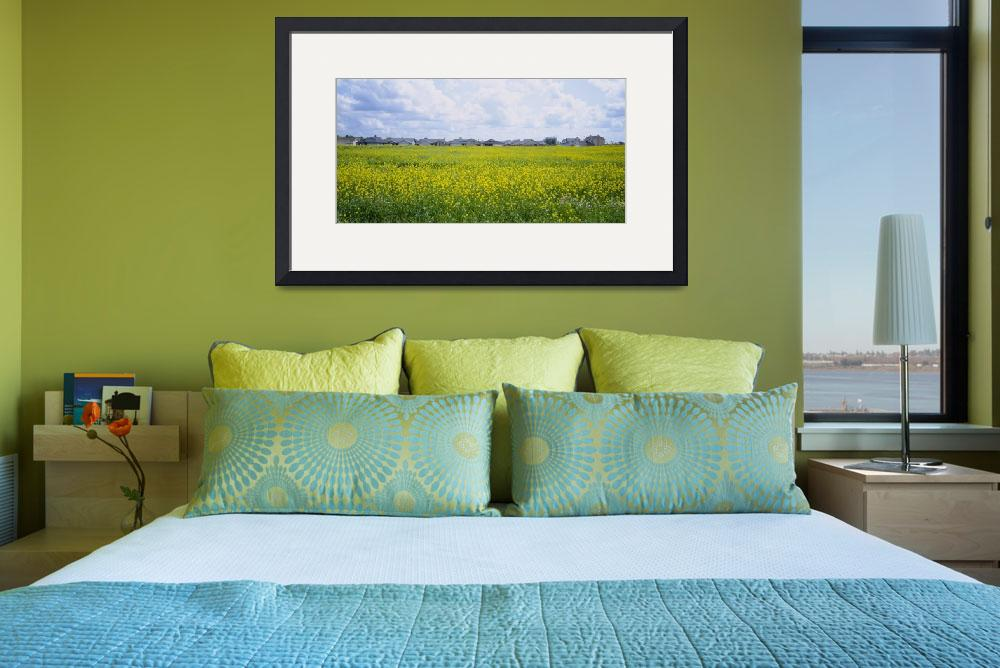 """""""Panoramic view of houses in a field&quot  by Panoramic_Images"""