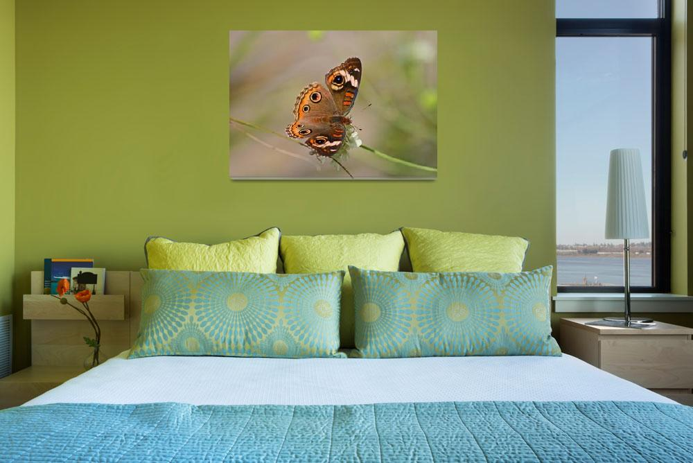 """""""Butterfly  Common Buckeye&quot  (2011) by KsWorldArt"""