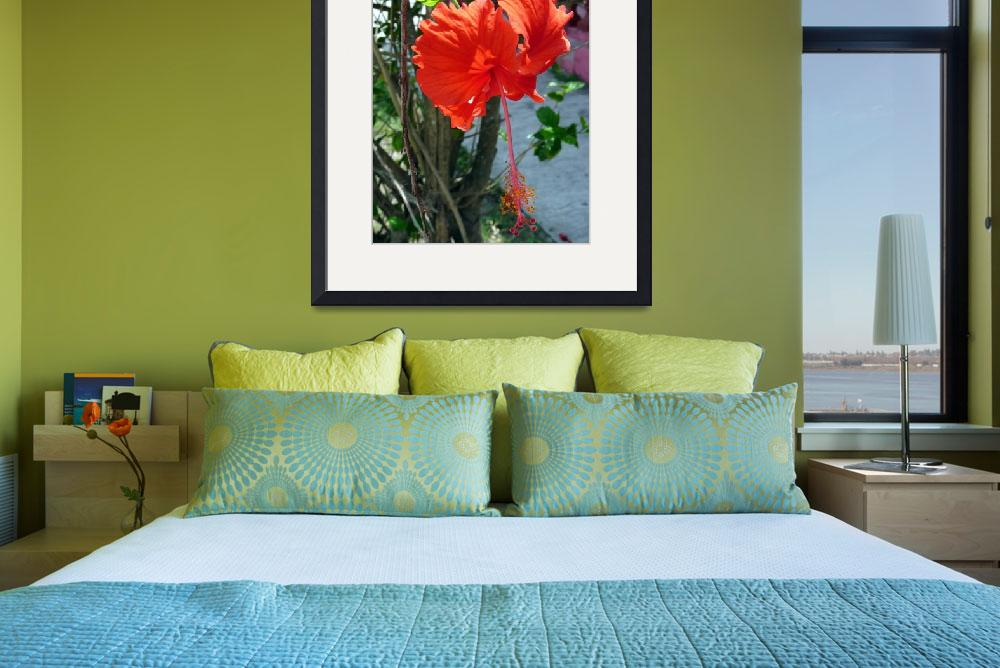 """""""HIBISCUS FLOWERS -2""""  (2010) by billdelaluz"""
