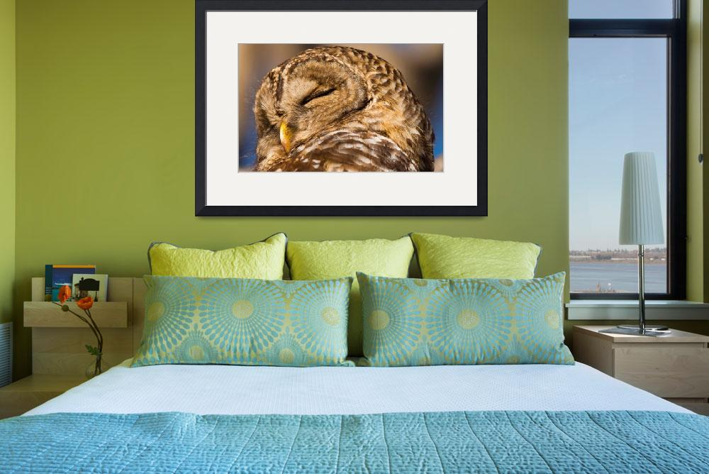 """""""Barred Owl Sleeping&quot  (2012) by NatureAsArt"""