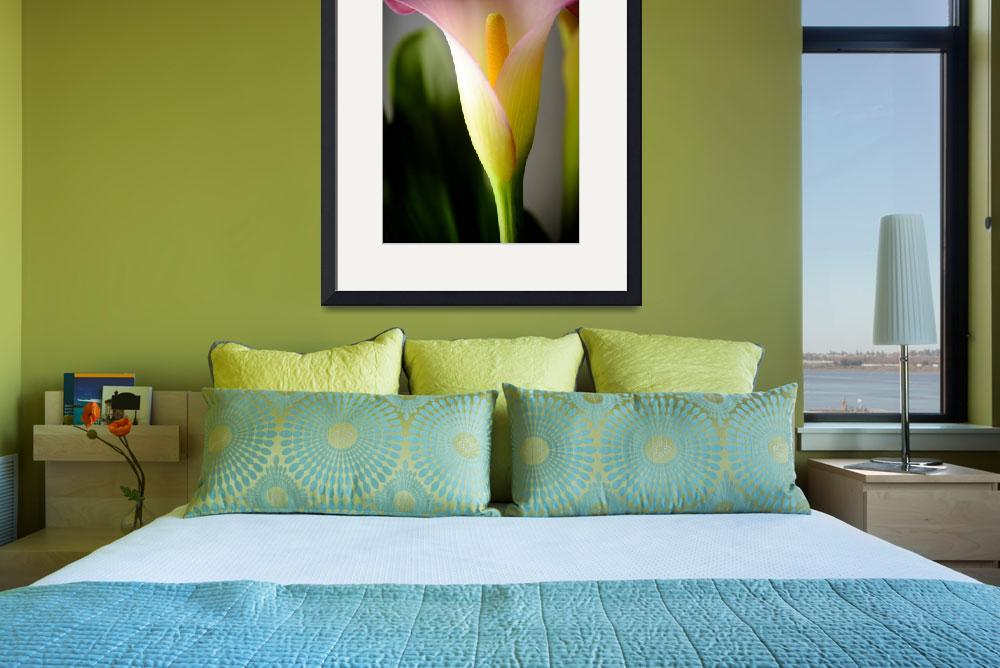 """""""Calla Lily 1""""  (2012) by LauraD"""