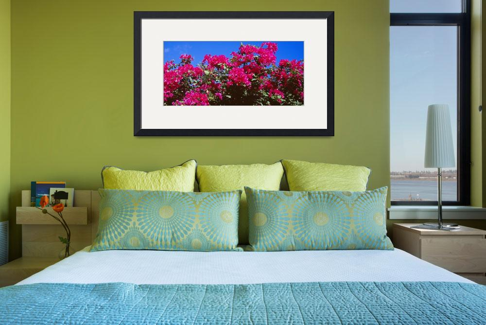 """""""Bougainvillea St. John US Virgin Islands&quot  by Panoramic_Images"""
