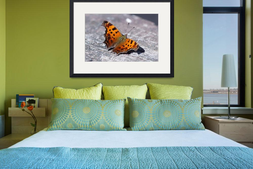 """""""Eastern Comma Butterfly""""  by cameragal"""