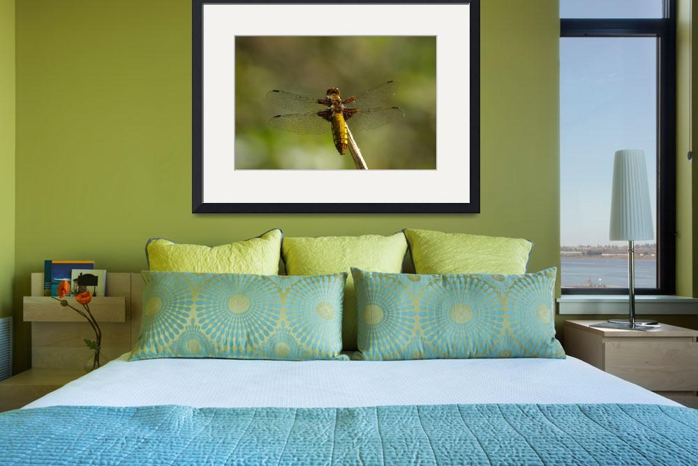 """""""Dragonfly&quot  (2008) by mellting"""