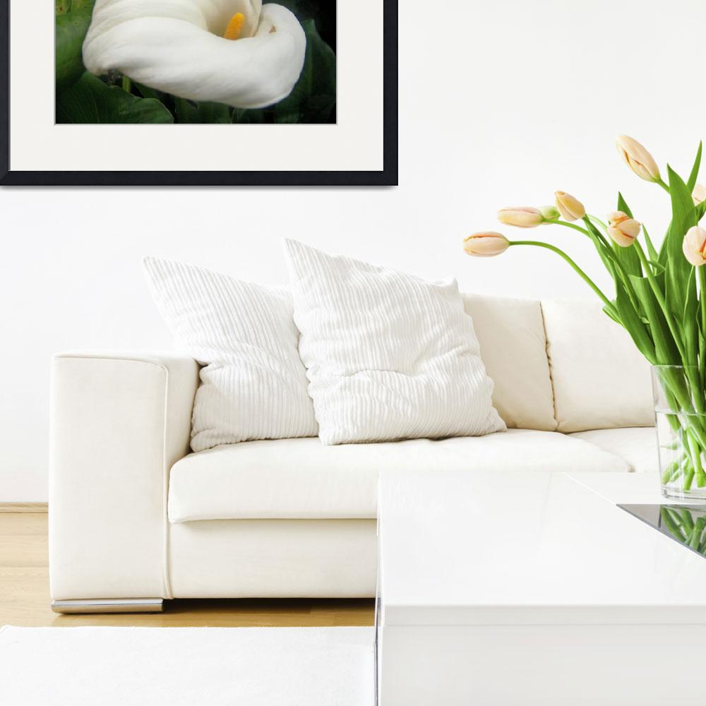 """""""Calla Lilly&quot  by imagistiks"""