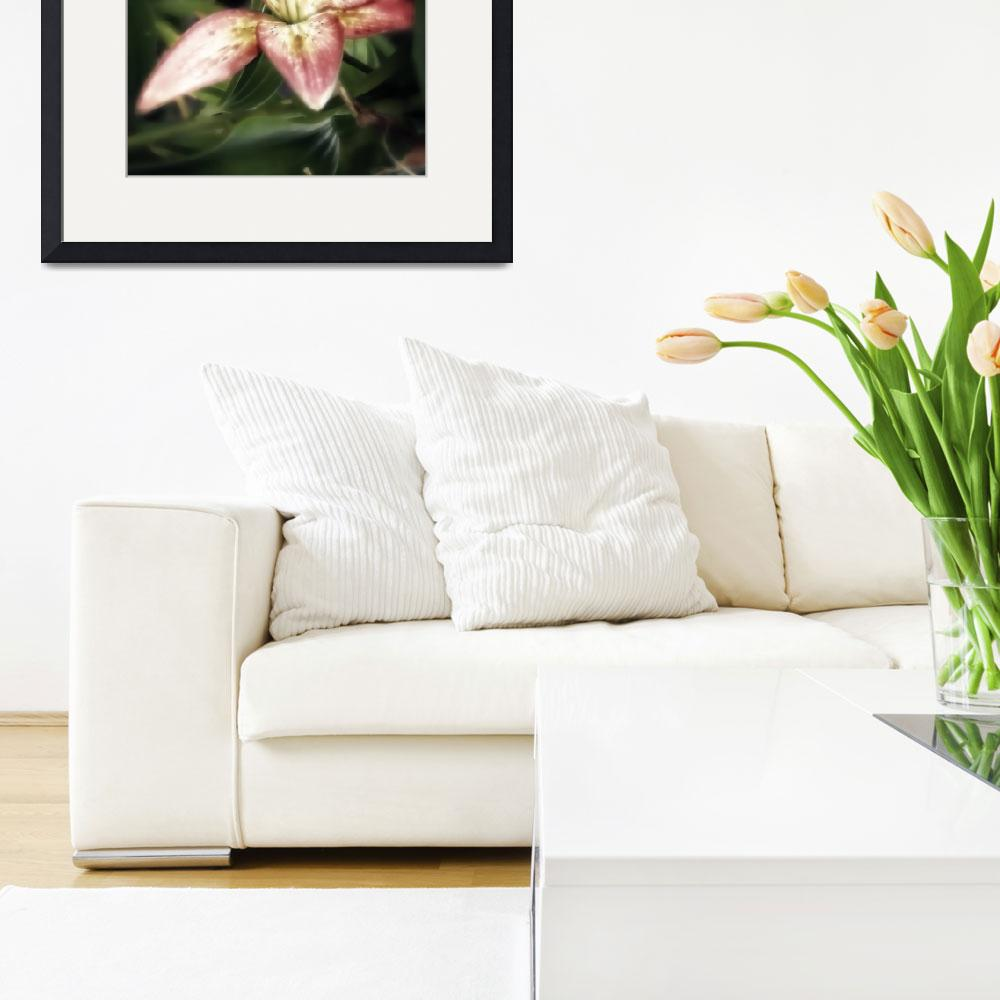 """""""lily hdr soft&quot  by lizmix"""