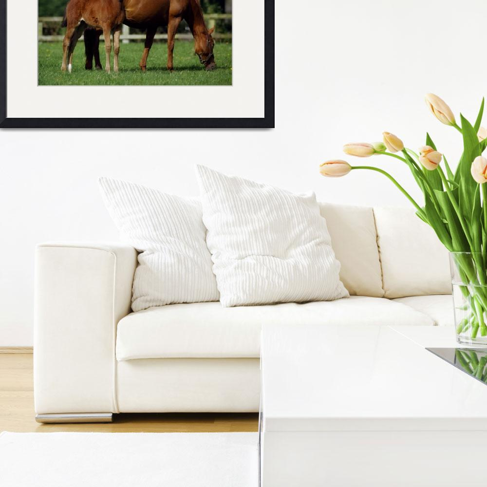 """""""Thoroughbreds Mare&quot  by DesignPics"""