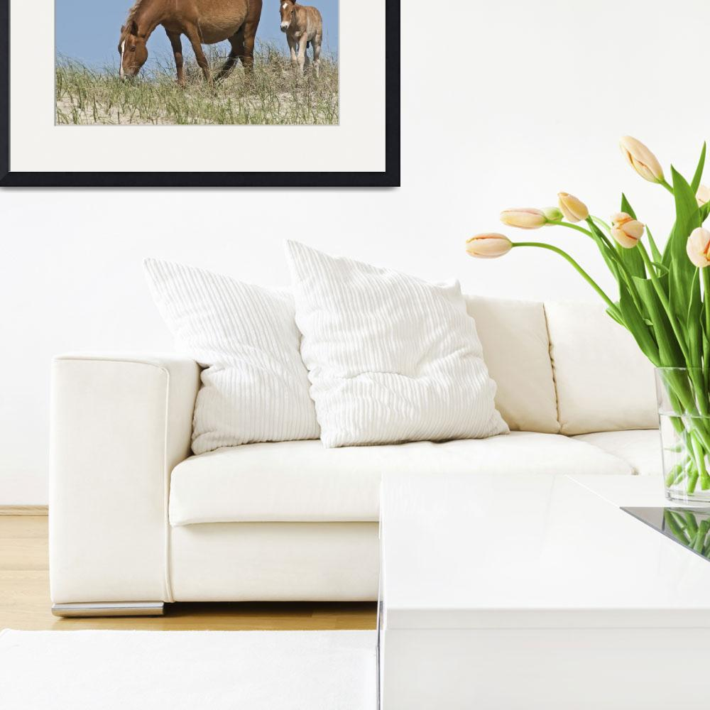 """""""The Wild Horses of Corolla&quot  (2014) by FotosbyCindy"""