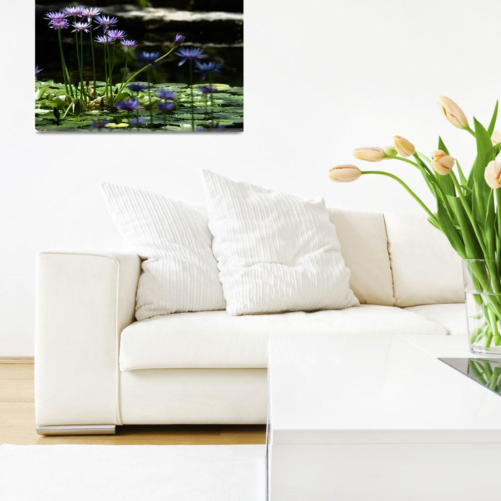 """""""LILY POND&quot  by tmckinleyphotography"""