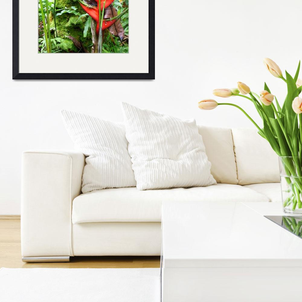 """""""Jungle Heliconia&quot  (2013) by joeyartist"""