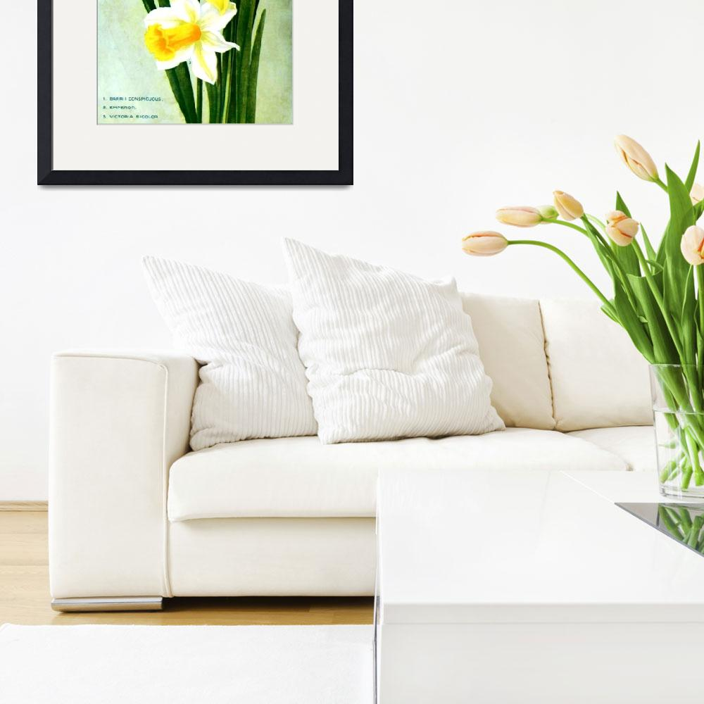 """Daffodil Flower Advertisement 1913&quot  (2013) by TheNorthernTerritory"