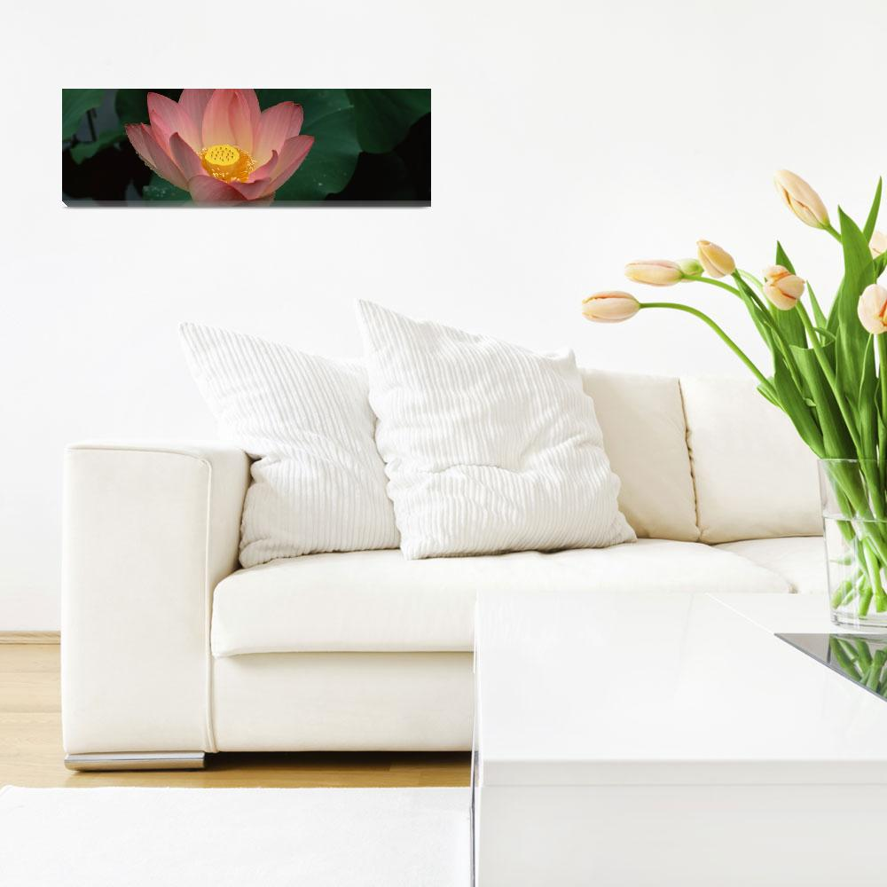"""Lotus blooming in a pond&quot  by Panoramic_Images"