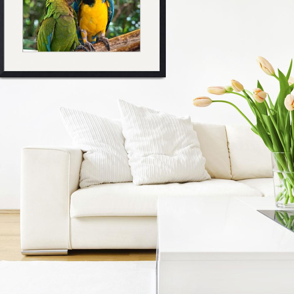"""""""Green, Blue and Gold Birds - Macaws in  Love&quot  (2010) by mjphoto-graphics"""