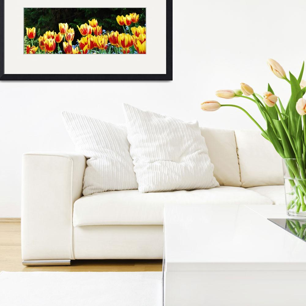 """""""Tulips on Fire""""  (2008) by westwindranchcreations"""