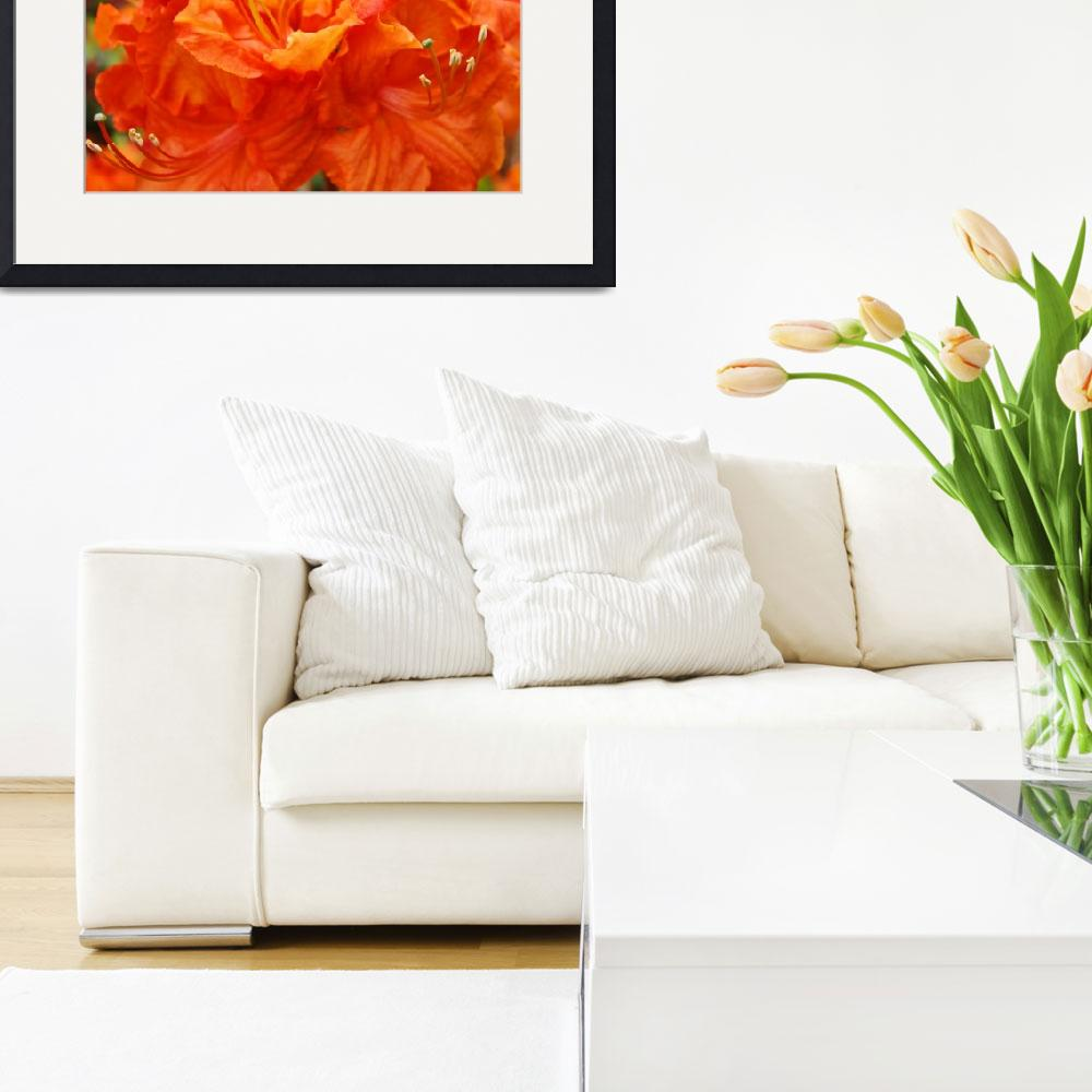 """""""Christmas Gift Gallery Orange RHODIES Art Gifts&quot  (2009) by BasleeTroutman"""