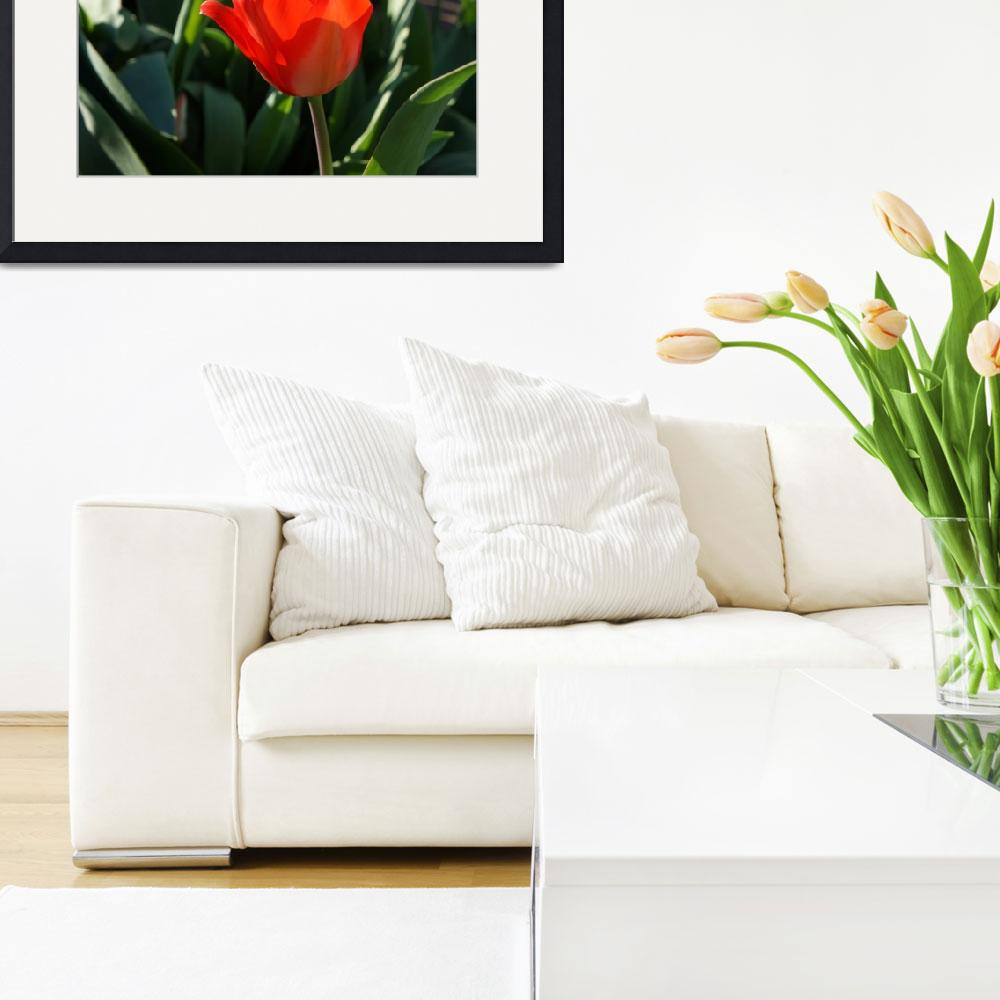 """""""RED Tulip Flowers Art Prints Giclee Canvas&quot  (2014) by BasleeTroutman"""