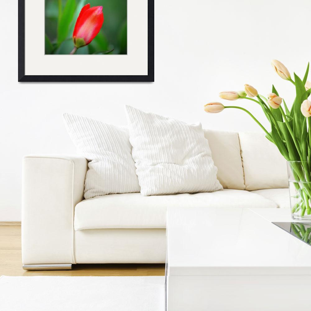 """""""Red Tulip and Bud""""  (2014) by joanhan"""