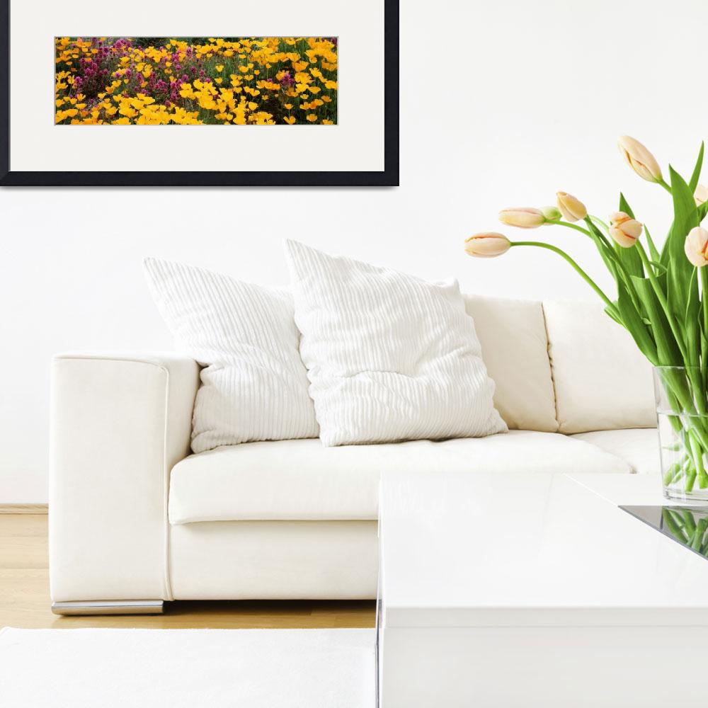 """""""Mexican Poppy Owl Clover AZ&quot  by Panoramic_Images"""