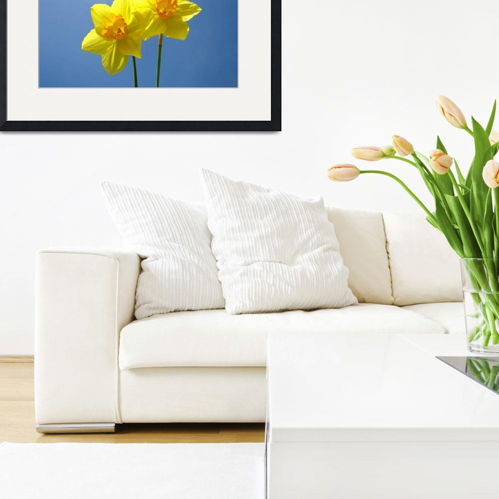 """""""Spring Blue Sky art prints Daffodil Flowers Decora&quot  (2014) by BasleeTroutman"""