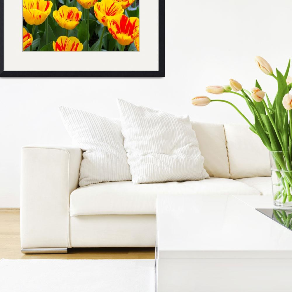"""""""Yellow and Red Tulips Upclose&quot  (2007) by NateLancer"""