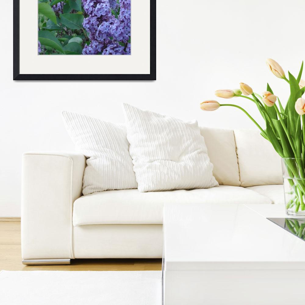 """""""Highland Park, Rochester NY - Lilacs&quot  by stacywest"""