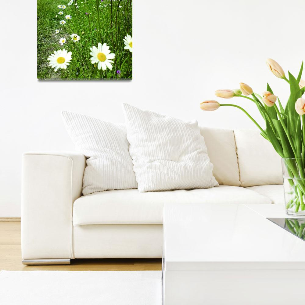 """""""daisies in perspective""""  (2008) by clairebrocklesby"""