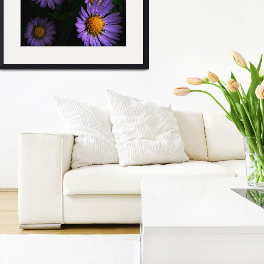 """""""Wild Asters&quot  (2013) by bavosiphotoart"""