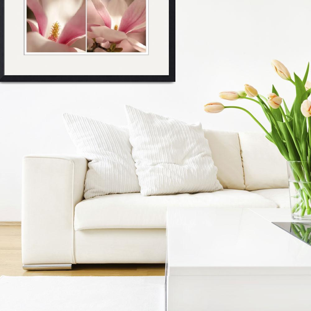 """""""magnolia double""""  (2011) by photoplace"""