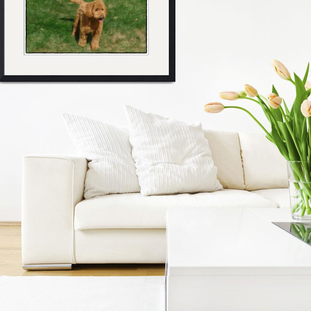 """""""PLAYFUL LABRADOODLE""""  (2012) by shaynaphotography"""