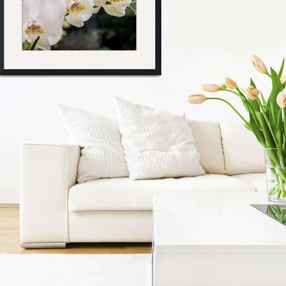"""""""white_orchids_DSC0417&quot  (2015) by SusanJanePepper"""