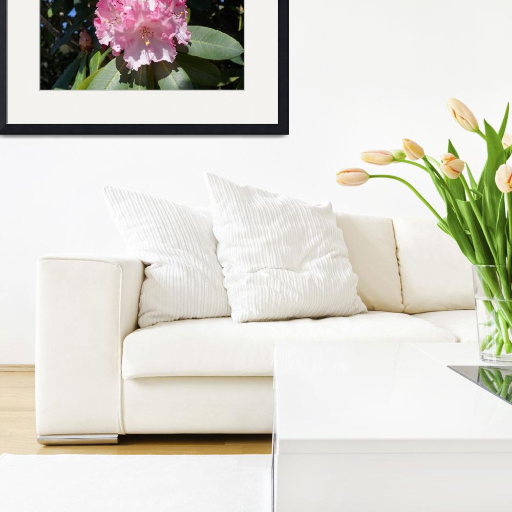 """Rhodies Pink White Flowers Photography Art Prints&quot  (2014) by BasleeTroutman"