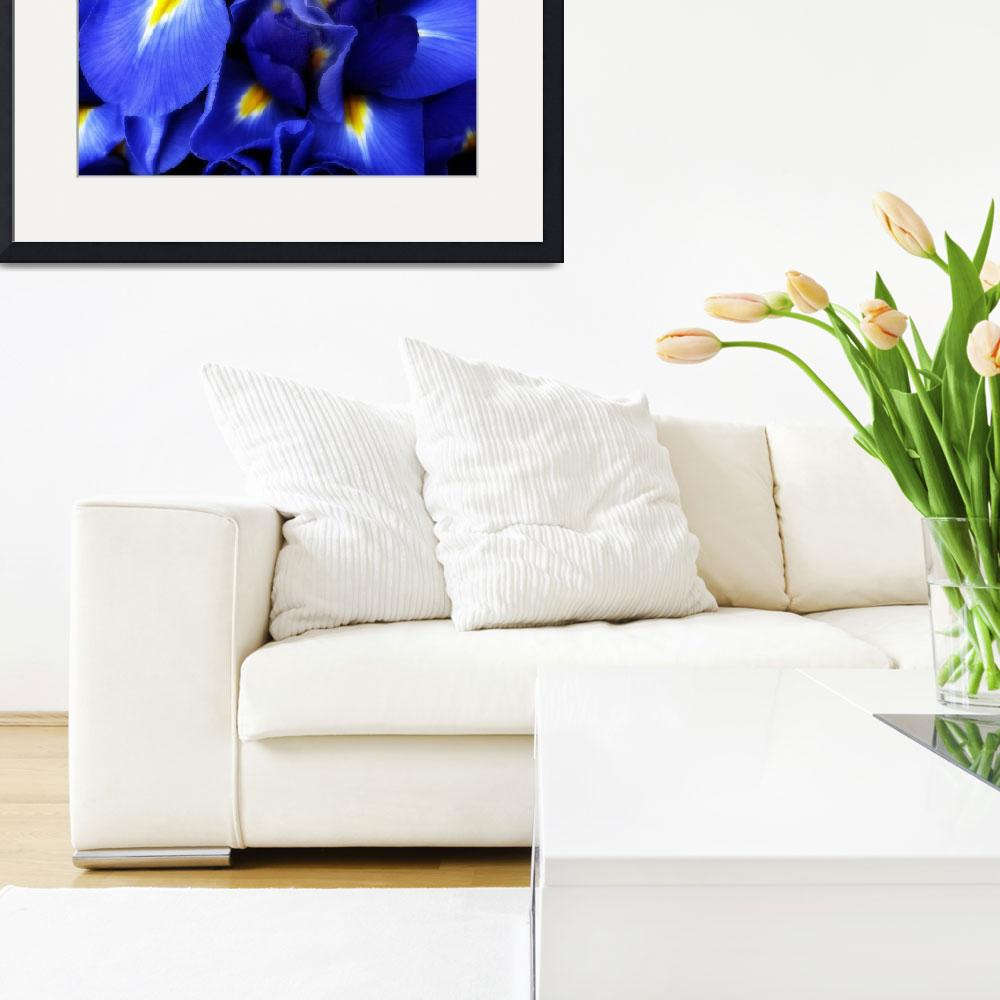 """""""Iris Abstract&quot  (2009) by JessicaJenney"""