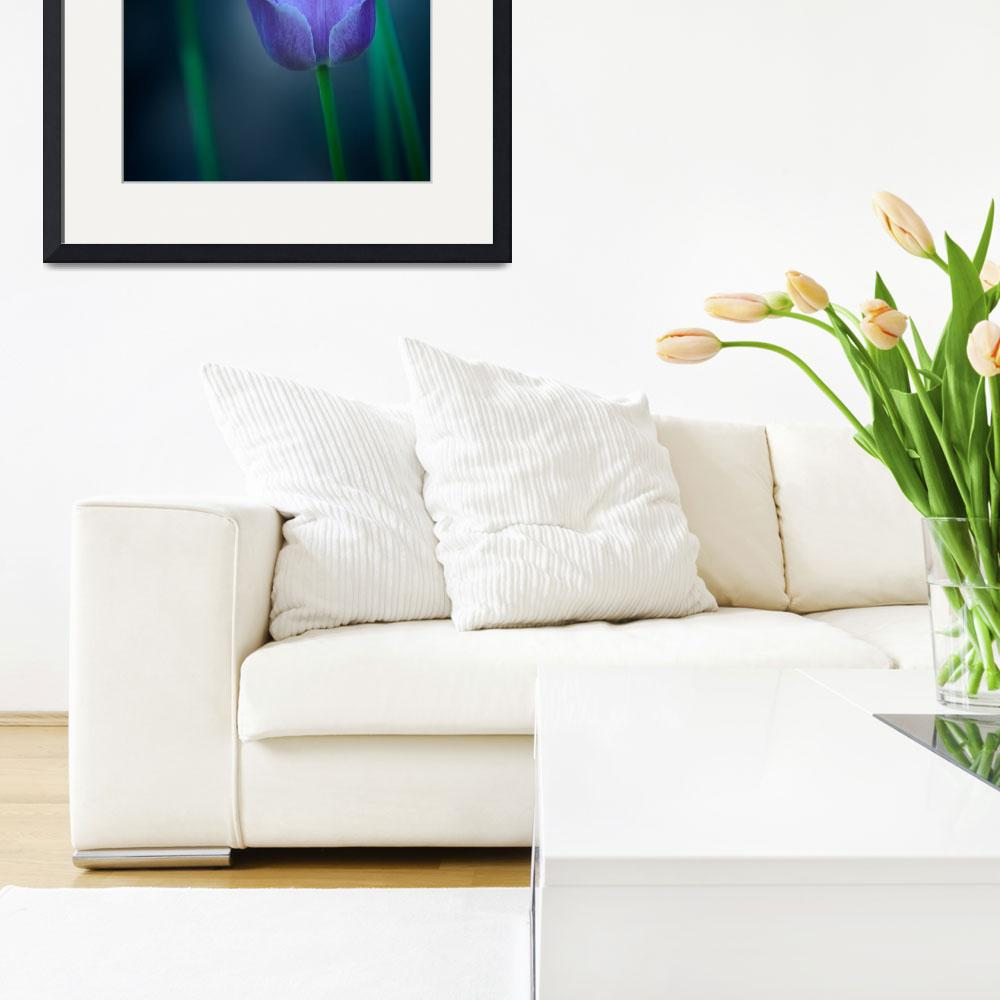"""""""Quebec Tulips&quot  (2008) by dawnleblanc"""