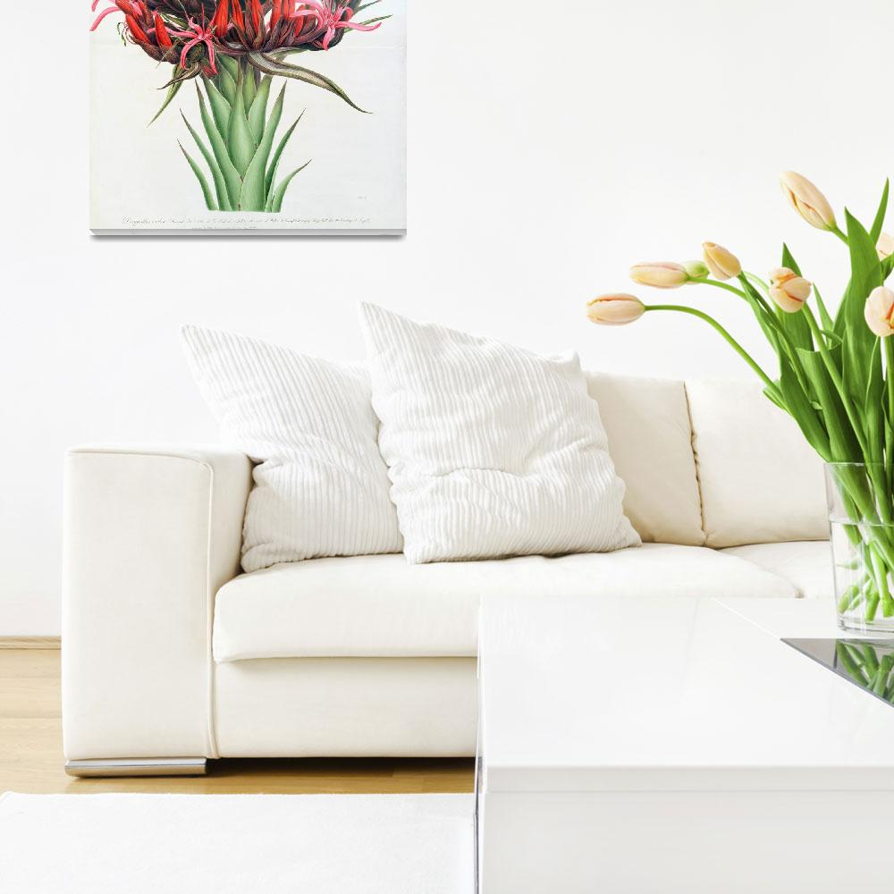 """""""Gymea Lily""""  by fineartmasters"""