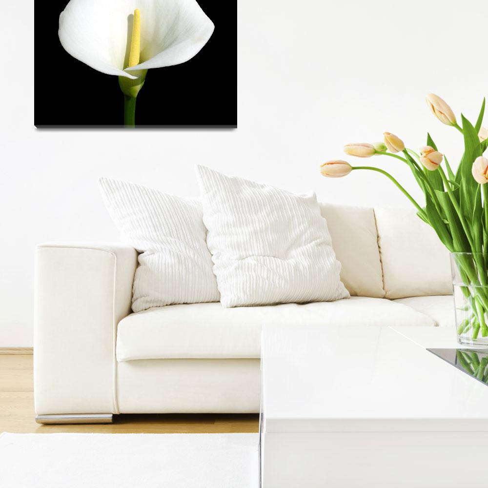 """""""Flower 160c White Floral Spring Macro&quot  (2010) by Ricardos"""