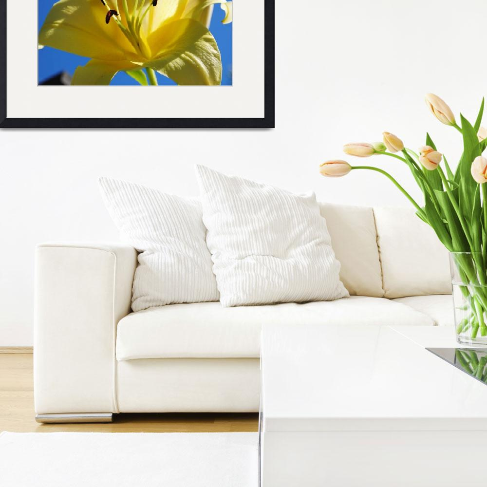 """""""Yellow Lily&quot  (2013) by Willssb"""