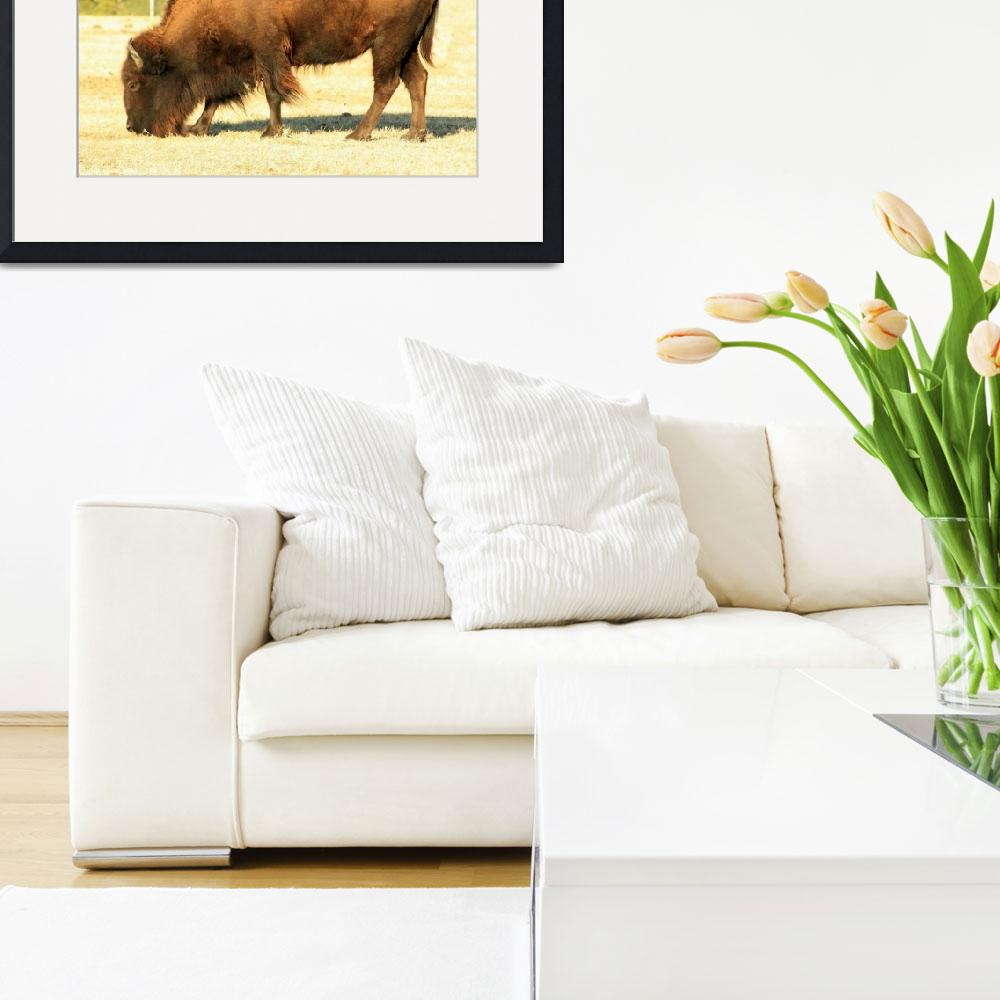 """""""American Bison""""  (2009) by rayjacque"""