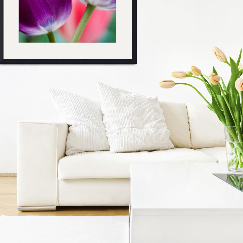 """""""Tulip Pair&quot  by OGphoto"""