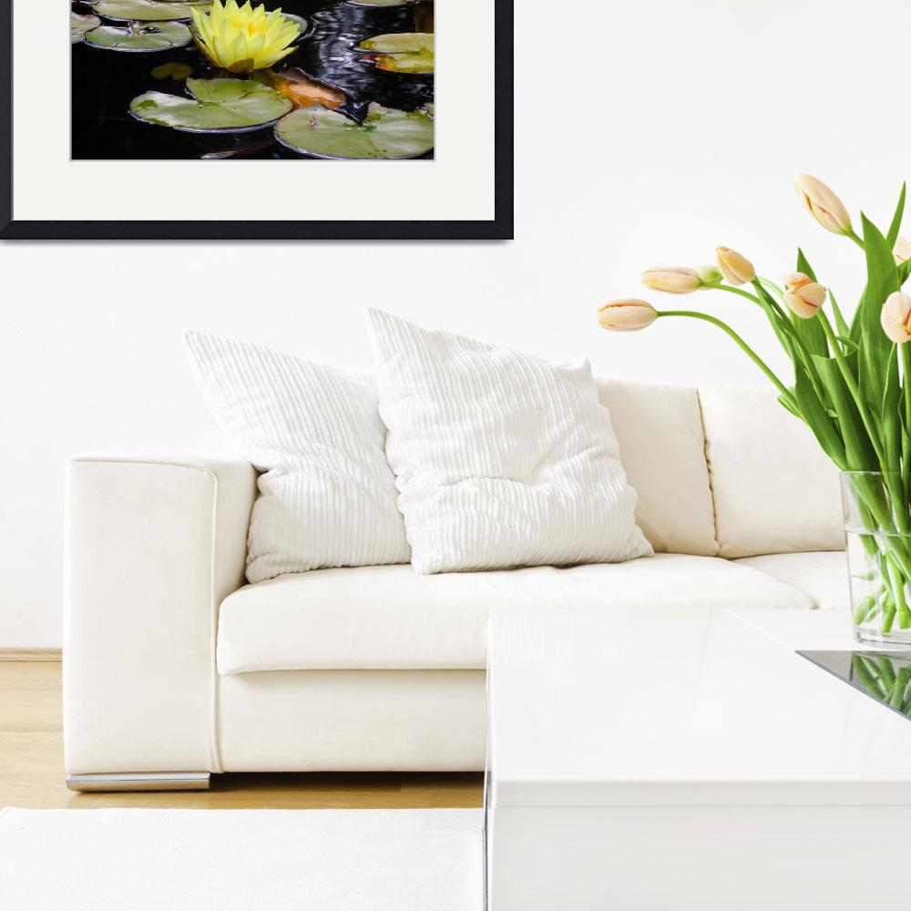 """""""Yellow Water Lily 2&quot  (2012) by ShaneWells"""