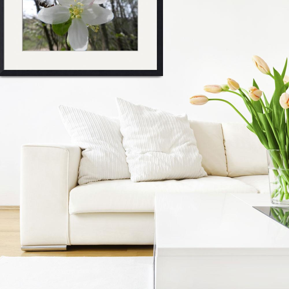 """""""white blossom expressive&quot  by lizmix"""