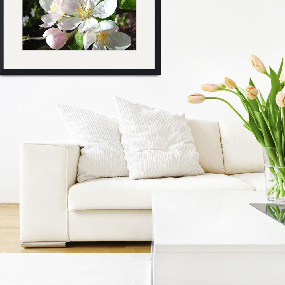 """Apple Blossoms Flowers Art Prints Spring Floral""  (2014) by BasleeTroutman"