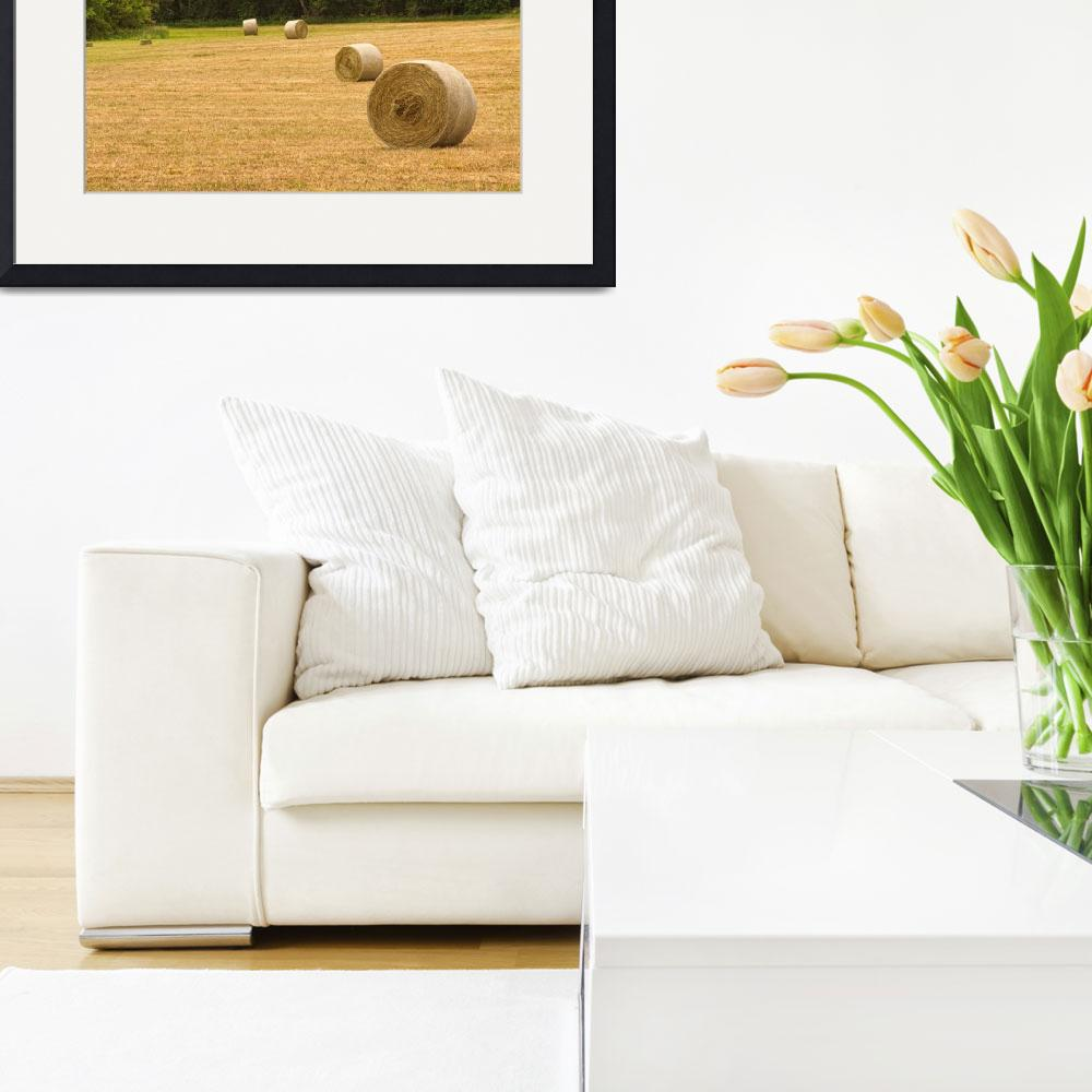 """""""Field of Freshly Baled Round Hay Bales&quot  (2011) by lightningman"""