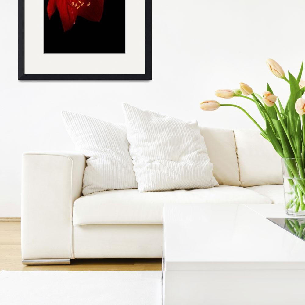"""""""Red Amaryllis - 2&quot  (2012) by AnnG"""