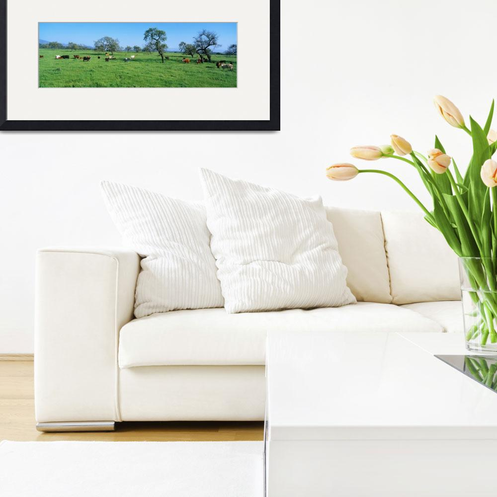 """""""Cattle in Spring Pasture Santa Ynez Valley CA&quot  by Panoramic_Images"""